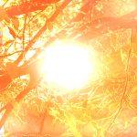 sunce.307