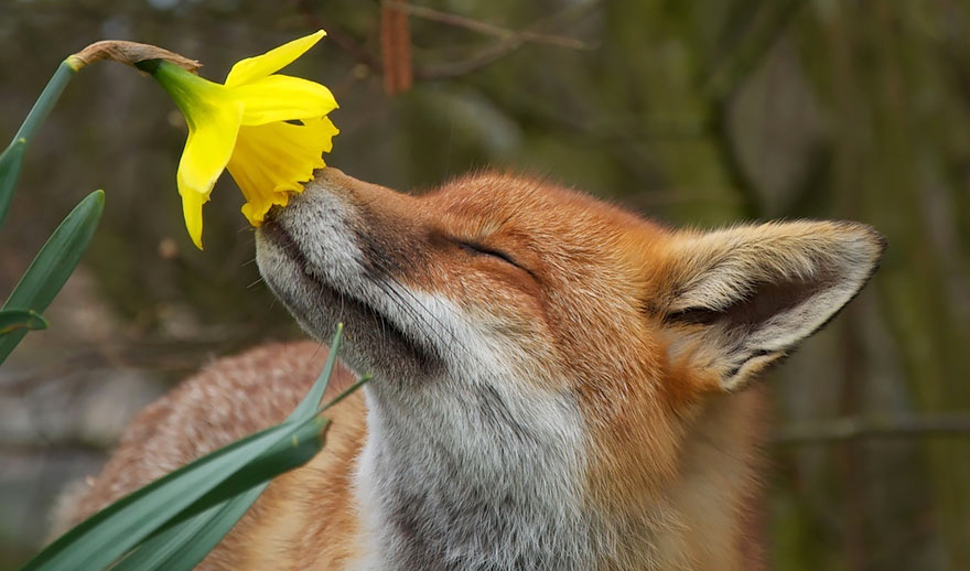 Kako postupamo sa životinjama, tako će biti i nama