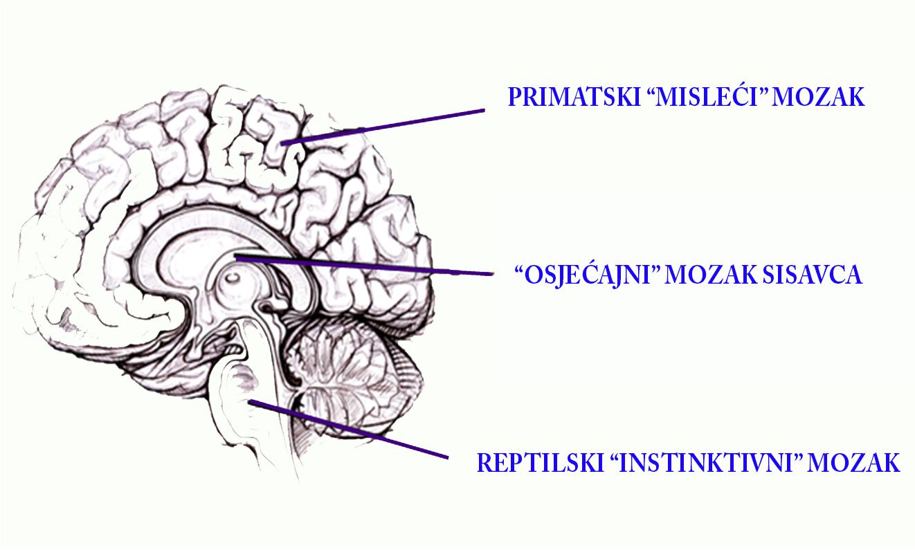 Mozak 1