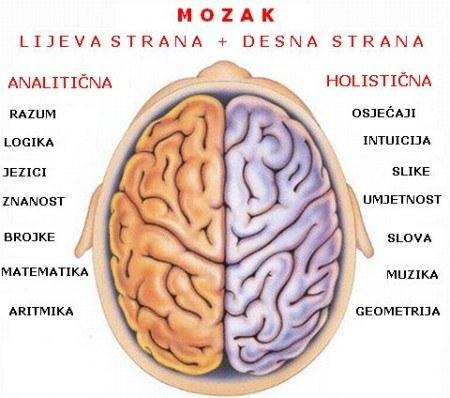 Mozak 2